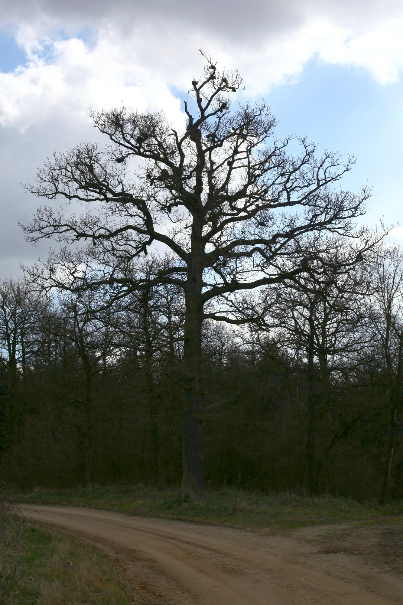 alter, knorriger Baum