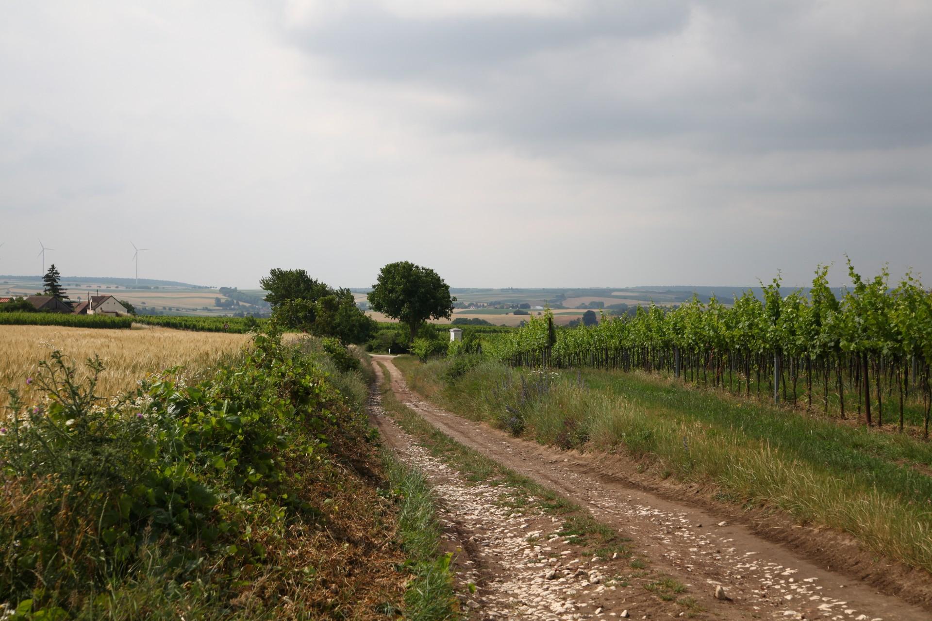 Blick in die Landschaft - unterwegs in Niedersulz
