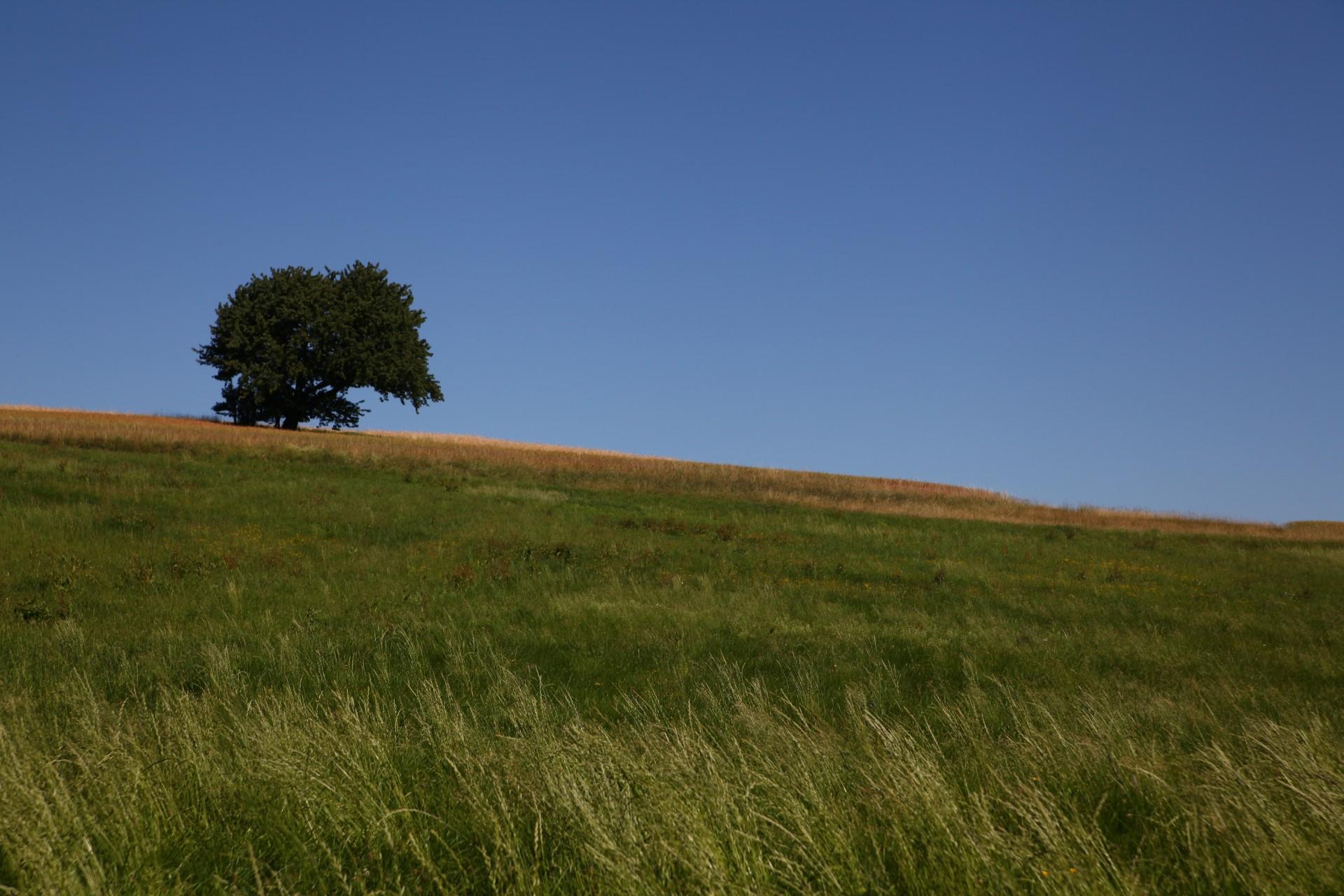 einsamer Baum in der Landschaft